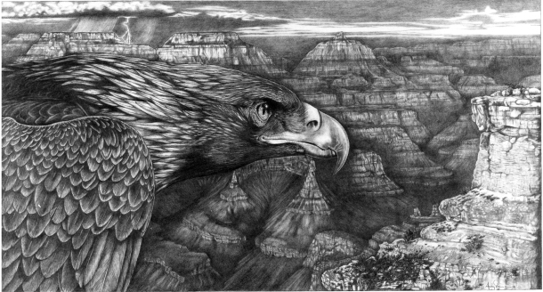 Golden Eagle (Pencil [graphite] drawing on paper)